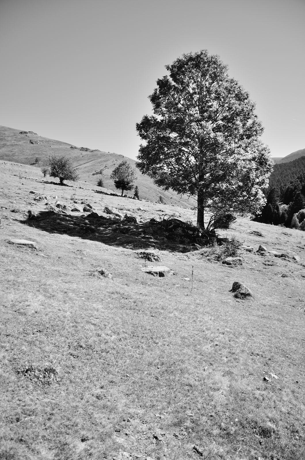 De Mont au Bois de Joannérous