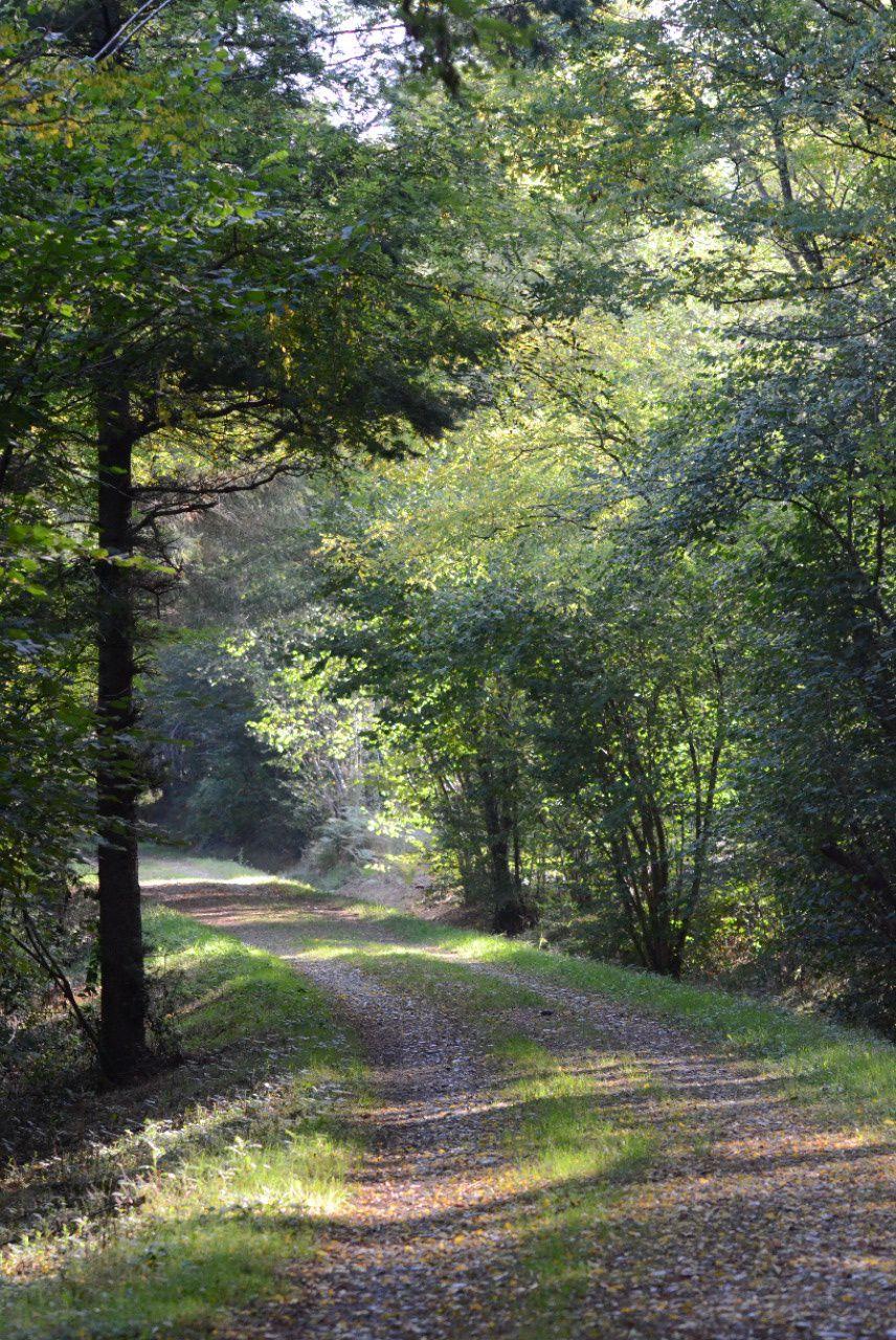 Dans le bois de Rieumes