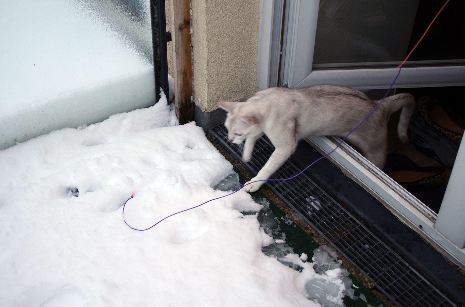Chats dans la neige
