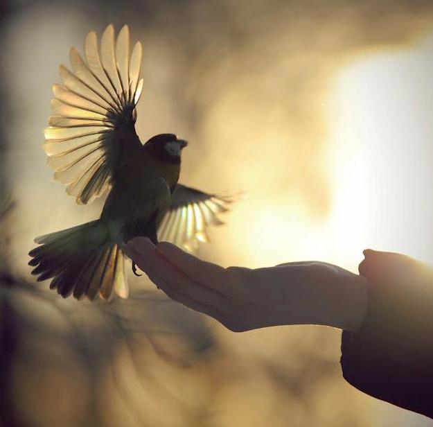 Lasciami volare