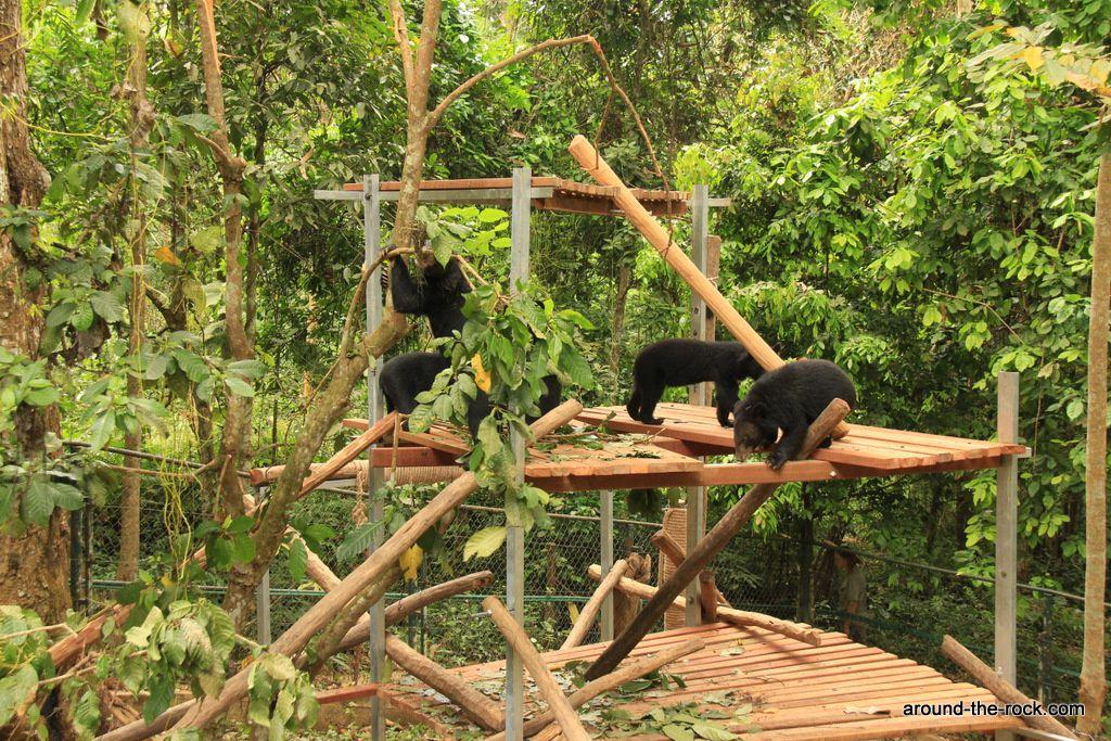 Photos des oursons récupérés chez les braconniers avant qu'ils ne soient vendus dans les fermes de production de bile