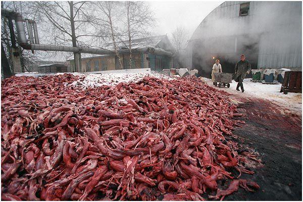 L'industrie de la fourrure en Russie.