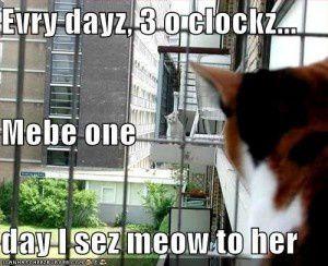 Todos los dias, a las 3 en punto...puede que algun dia le diga meow