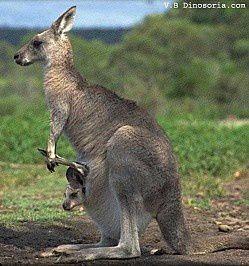 L'ivresse du kangourou - Kenneth Cook