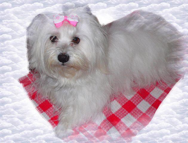 Ma chienne Carla 4 ans le 2 décembre 2011