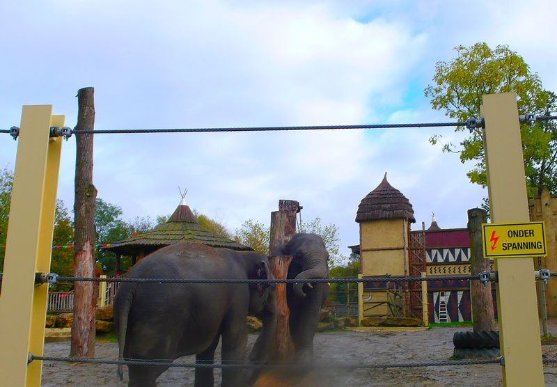 les éléphants qui s'amuse