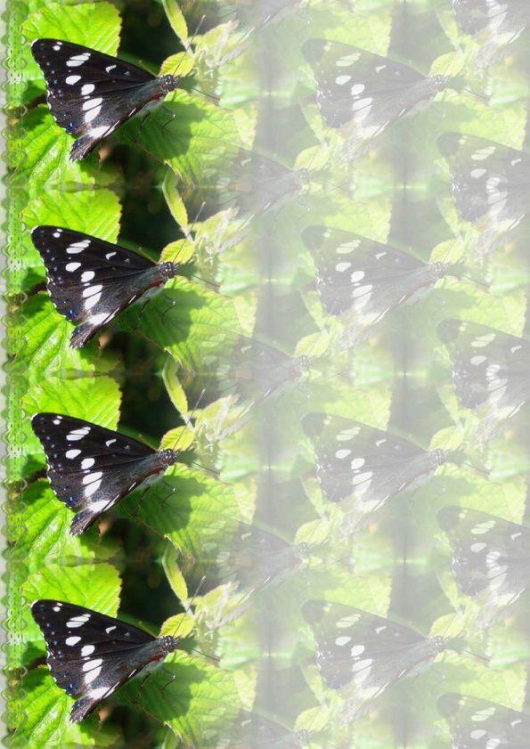 Papillon azure Incredimail &amp&#x3B; Papier A4 h l &amp&#x3B; outlook &amp&#x3B; enveloppe &amp&#x3B; 2 cartes A5   pap_papillon_azure1024