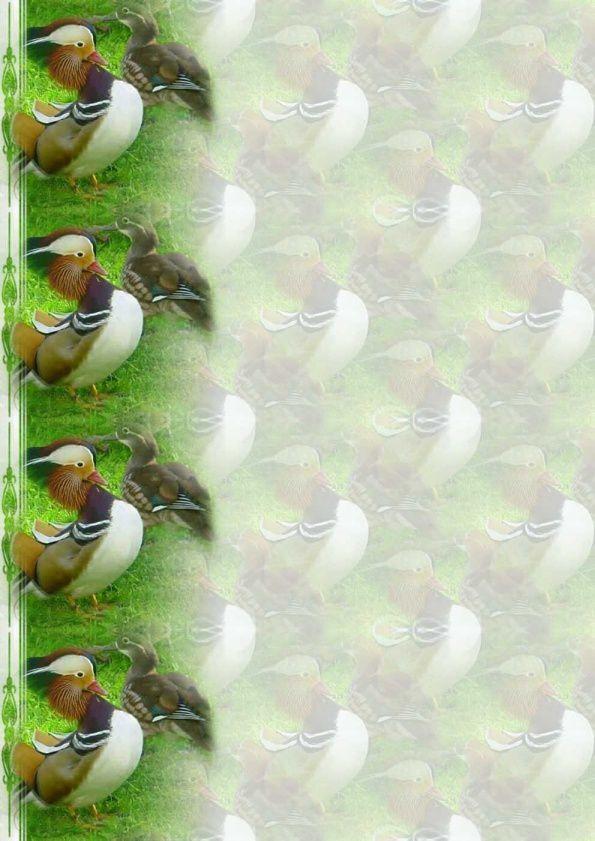 Oiseaux Papiers A4 haut (Canards) ( 12 pcs )