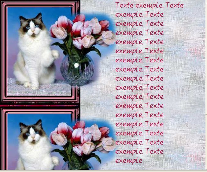 Chat tulipes sdc Incredimail &amp&#x3B; Papier A4 h l &amp&#x3B; outlook &amp&#x3B; enveloppe &amp&#x3B; 2 cartes A5  chat_exotics03_wbz_sdc