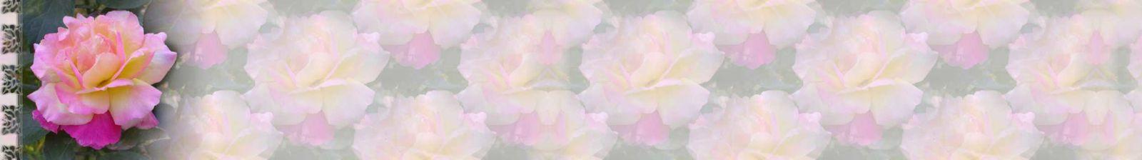 Rose rose sous la pluie Incredimail &amp&#x3B; Papier A4 h l &amp&#x3B; outlook &amp&#x3B; enveloppe &amp&#x3B; 2 cartes A5   rose_rose_0000_mp