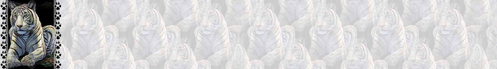 Tigre blanc Incredimail &amp&#x3B; Papier A4 h l &amp&#x3B; outlook &amp&#x3B; enveloppe &amp&#x3B; 2 cartes A5     white_tiger_egs_110702_jp