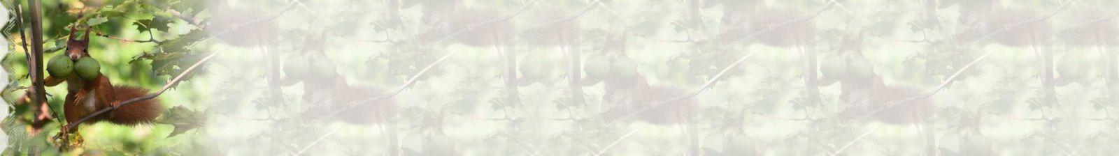 Ecureuil avec noix Incredimail &amp&#x3B; Papier A4 h l &amp&#x3B; outlook &amp&#x3B; enveloppe &amp&#x3B; 2 cartes A5 &amp&#x3B; signets 3 langues    an_ecureuil_micheline_ecureuils_20110225_00