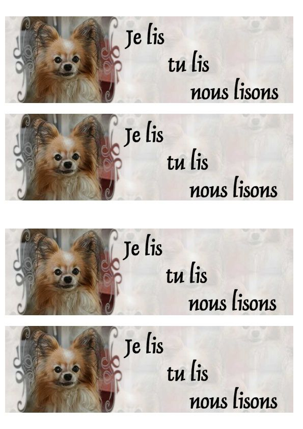 Chien Papillon Tify Incredimail &amp&#x3B; outlook &amp&#x3B; A4 h l &amp&#x3B; Enveloppe &amp&#x3B; 2 cartes A5 &amp&#x3B; signets 3 langues chien_papillon_tify_290812_11_00
