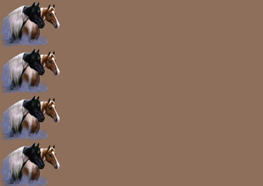 Chevaux têtes Incredimail &amp&#x3B; Papier A4 h l &amp&#x3B; outlook &amp&#x3B; enveloppe &amp&#x3B; 2 cartes A5 &amp&#x3B; signets 3 langues   thimandhersmall
