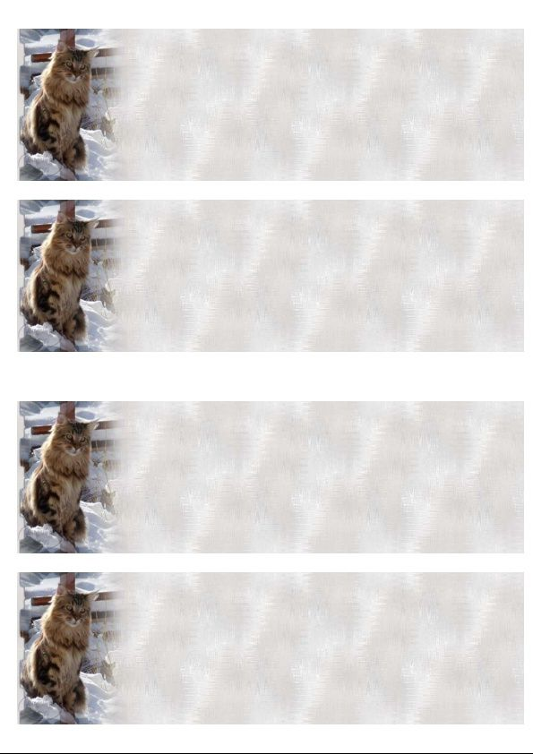 Chat Maine Coon Incredimail &amp&#x3B; outlook &amp&#x3B; A4 h l &amp&#x3B; enveloppe &amp&#x3B; 2 cartes A5 &amp&#x3B; signets 3 langues chat_maincoon_gedc0742_00