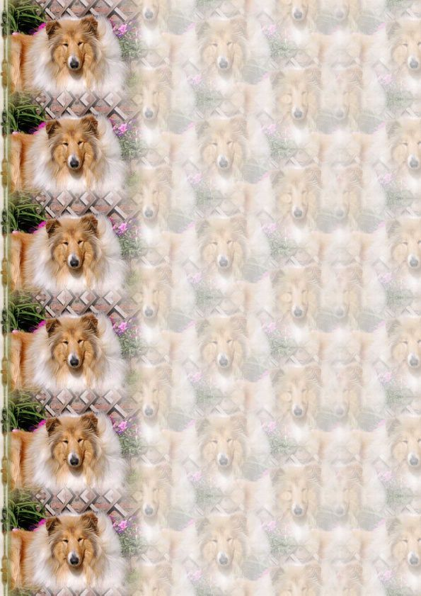 Colley Incredimail &amp&#x3B; Papier A4 h l &amp&#x3B; outlook &amp&#x3B; enveloppe &amp&#x3B; 2 cartes A5 &amp&#x3B; signets 3 langues     chien_colley_onderwerp_leddy92