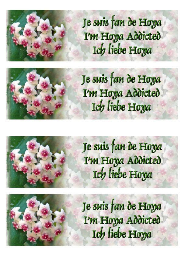 Hoya Obovata Incredimail &amp&#x3B; Papier A4 h l &amp&#x3B; outlook &amp&#x3B; enveloppe &amp&#x3B; 2 cartes A5 &amp&#x3B; signets 3 langues + hoya addicted  hoya_obovata_00