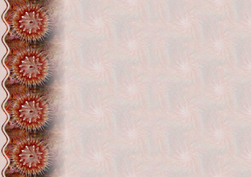 Créature marine Incredimail &amp&#x3B; Papier A4 h l &amp&#x3B; outlook &amp&#x3B; enveloppe &amp&#x3B; 2 cartes A5 &amp&#x3B; signets 3 langues    anm_coral_four