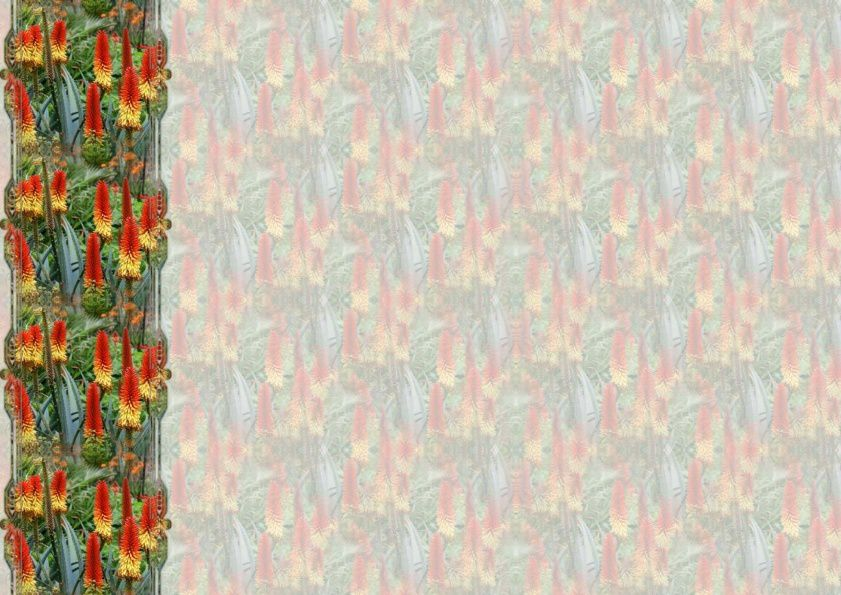 Aloe vera fleurs Incredimail &amp&#x3B; Papier A4 h l &amp&#x3B; outlook &amp&#x3B; enveloppe &amp&#x3B; 2 cartes A5 &amp&#x3B; signets 3 langues      plantes_medicinales_aloe_vera_fleurs_00