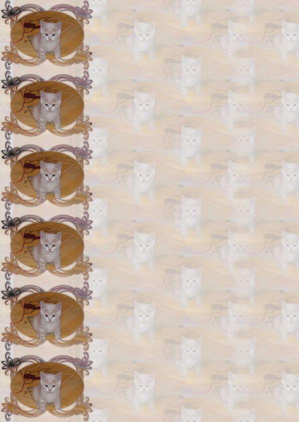 British Shorthair Incredimail &amp&#x3B; Papier A4 h l &amp&#x3B; outlook &amp&#x3B; enveloppe &amp&#x3B; 2 cartes A5 &amp&#x3B; signets 3 langues      chat_british_shorthair_any_har_kitens_160907_007_00