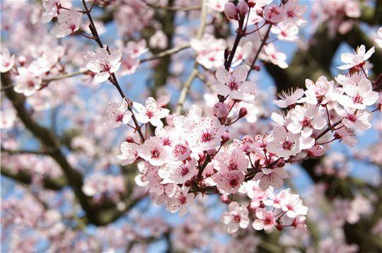 Les arbres qui bourgeonnent, l'éclosion des fleurs, les températures estivales sont de retour? Célébrons le PRINTEMPS...