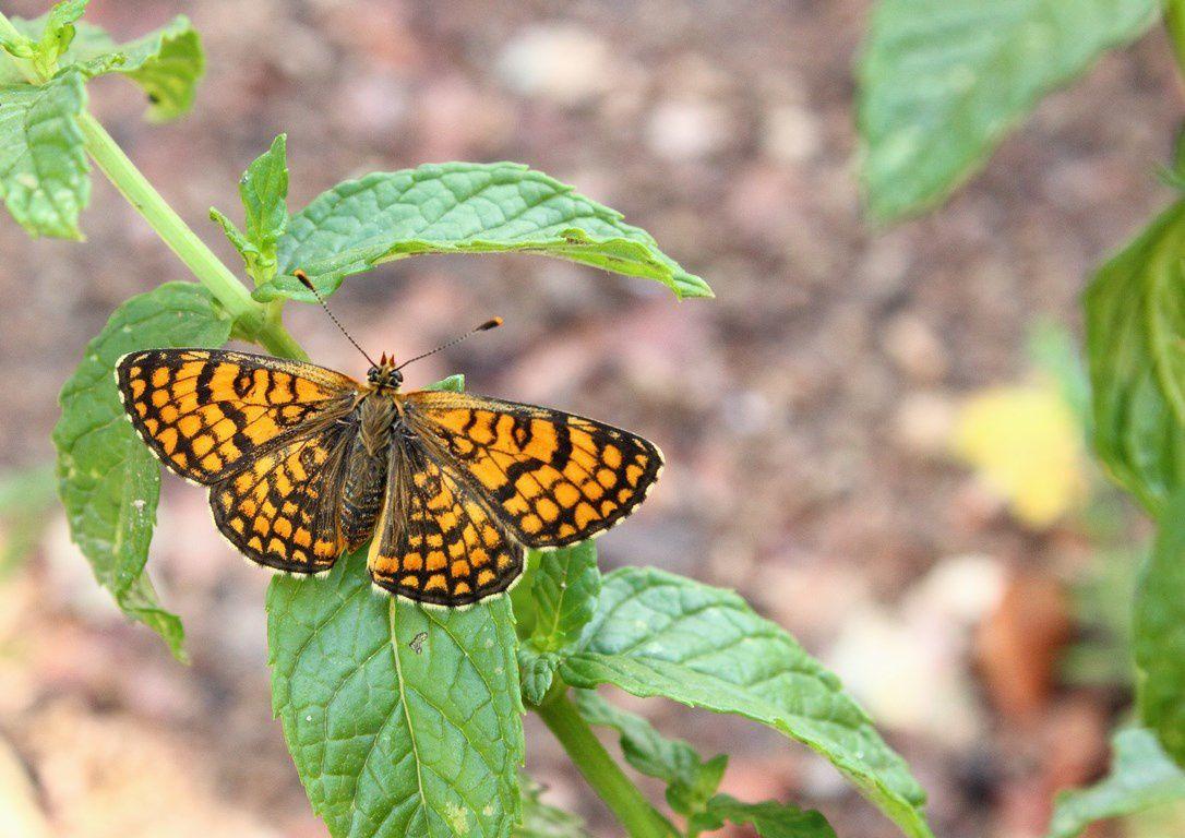 Escargots, libellules et papillons sont de sortie à Vort !