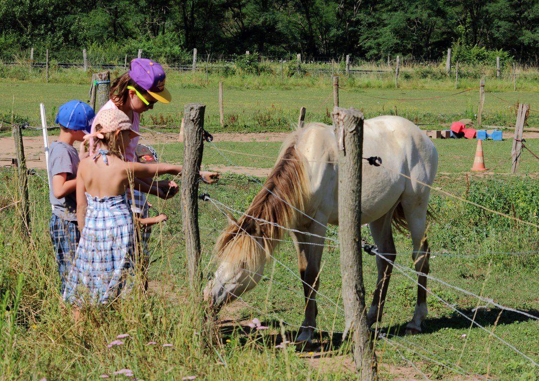 Allons voir les chevaux ! En plus, il y a un poulain. L'un des chevaux a bien voulu s'approcher, nous lui avons donné de l'herbe et nous avons pu le toucher.