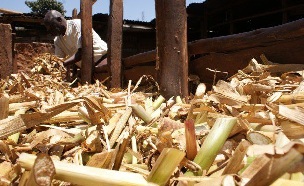 How Do we Support Africa's Smallholder Farmers?