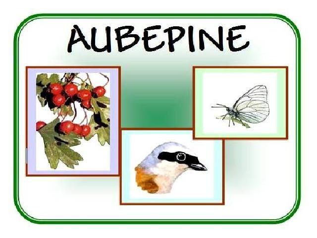 Sortie Nature avec Aubépine ce 25 juillet