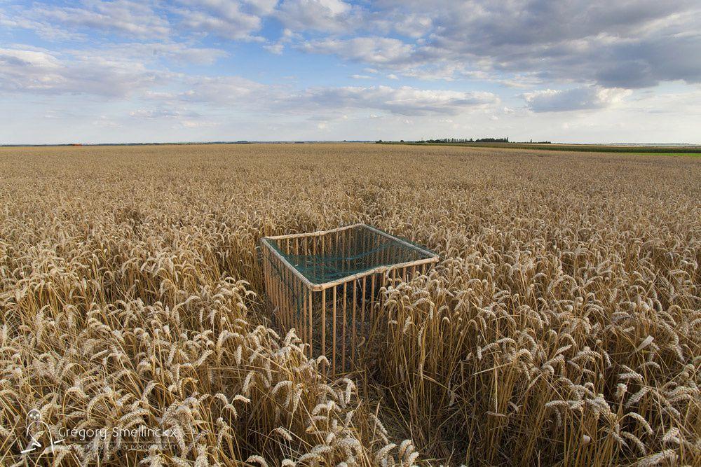 Cage provisoire permettant de mettre en sécurité les jeunes pendant le passage de l'engin agricole.