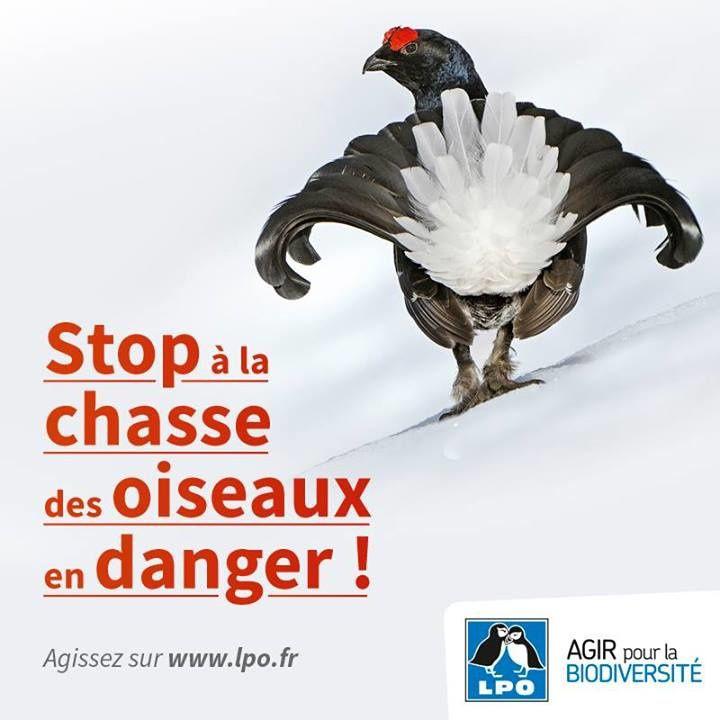 Dites STOP à la chasse des oiseaux en danger !