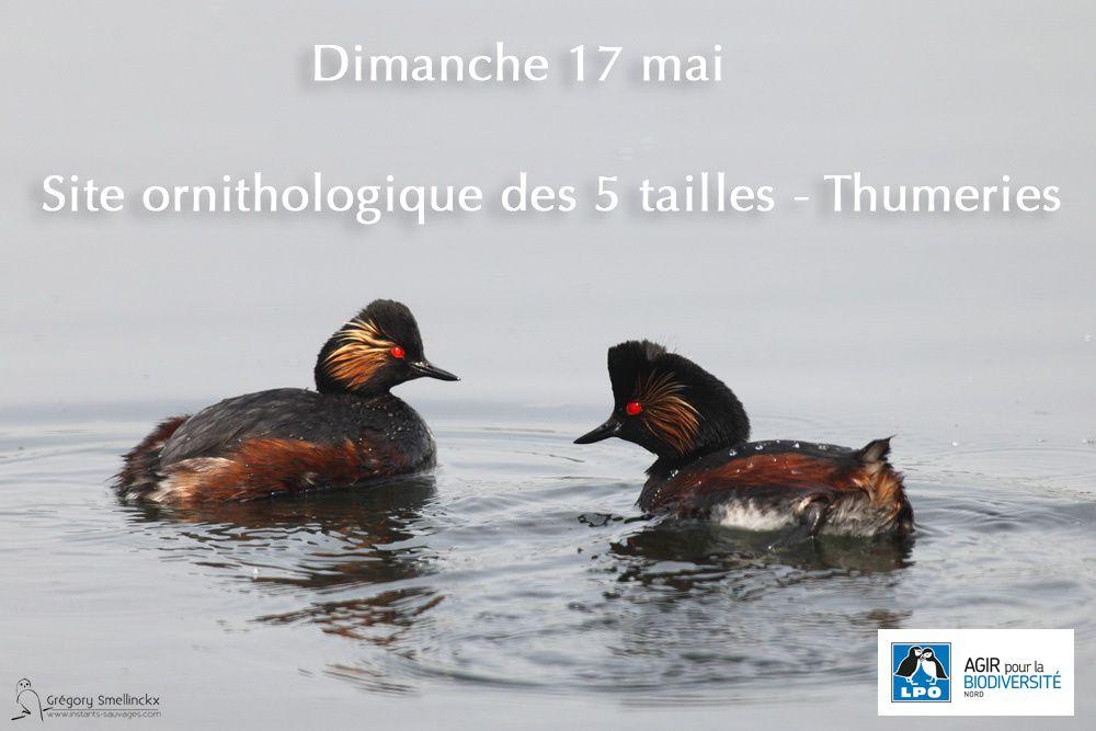 Dimanche 17 mai, site ornithologique des 5 tailles