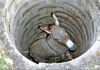 Morale : L'âne au fonds du puits