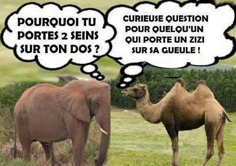 blague drole animaux
