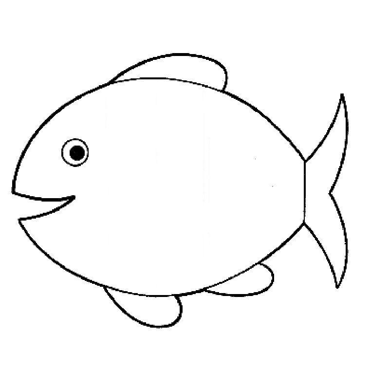 Des beaux poissons tout brillants !