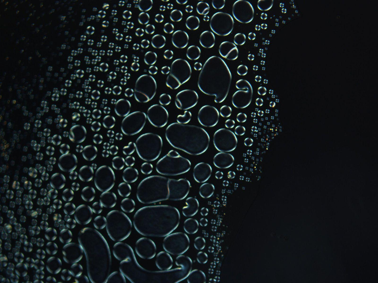 Istantanea catturata al microscopio sotto luce polarizzata, durante una transizione di fase di cristalli liquidi. Cortesia: Malik Qasim / University of Cambridge / Nokia