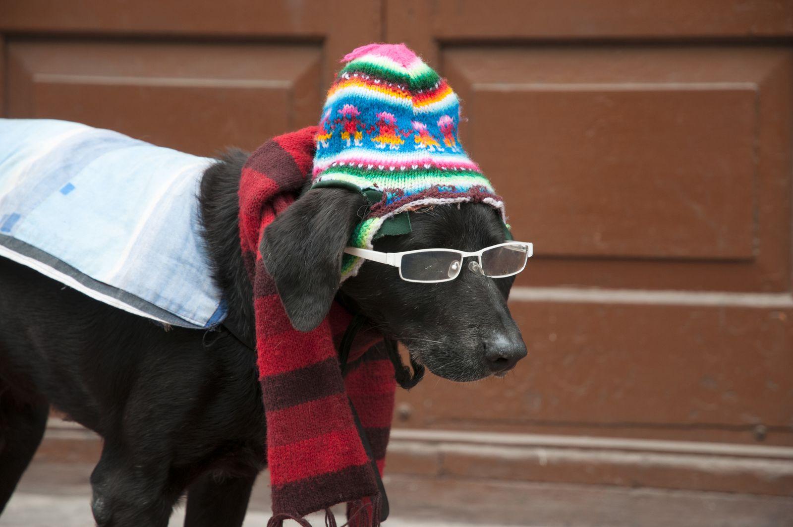 Deuxième: le chien par Sylvain