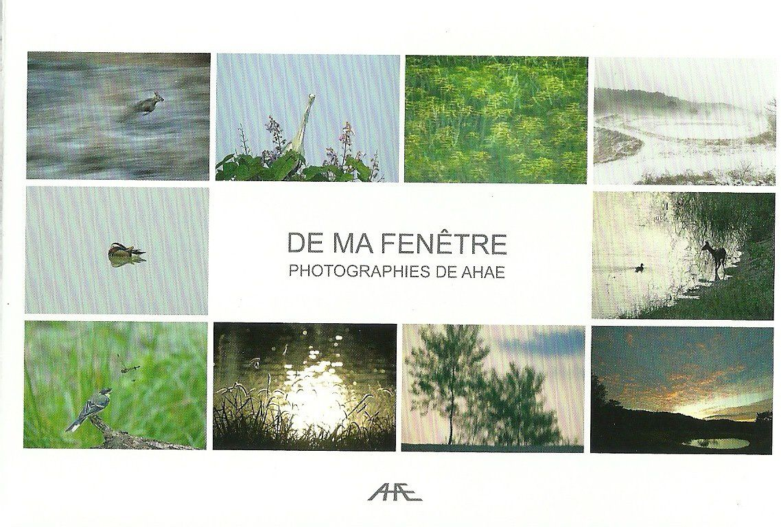 Expo de ma fen tre ahae myrtille boyer photographie for Ahae de ma fenetre