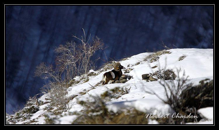 Toujours dans le massif du Queyras sur un versant ensoleillé