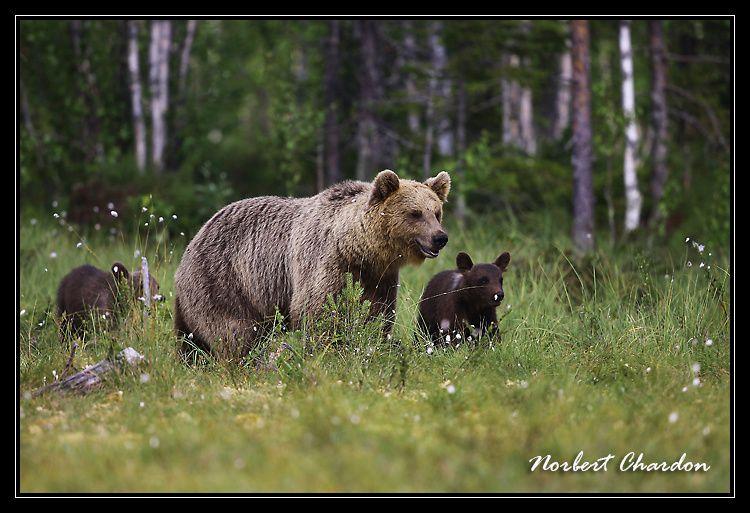 Finlande nature