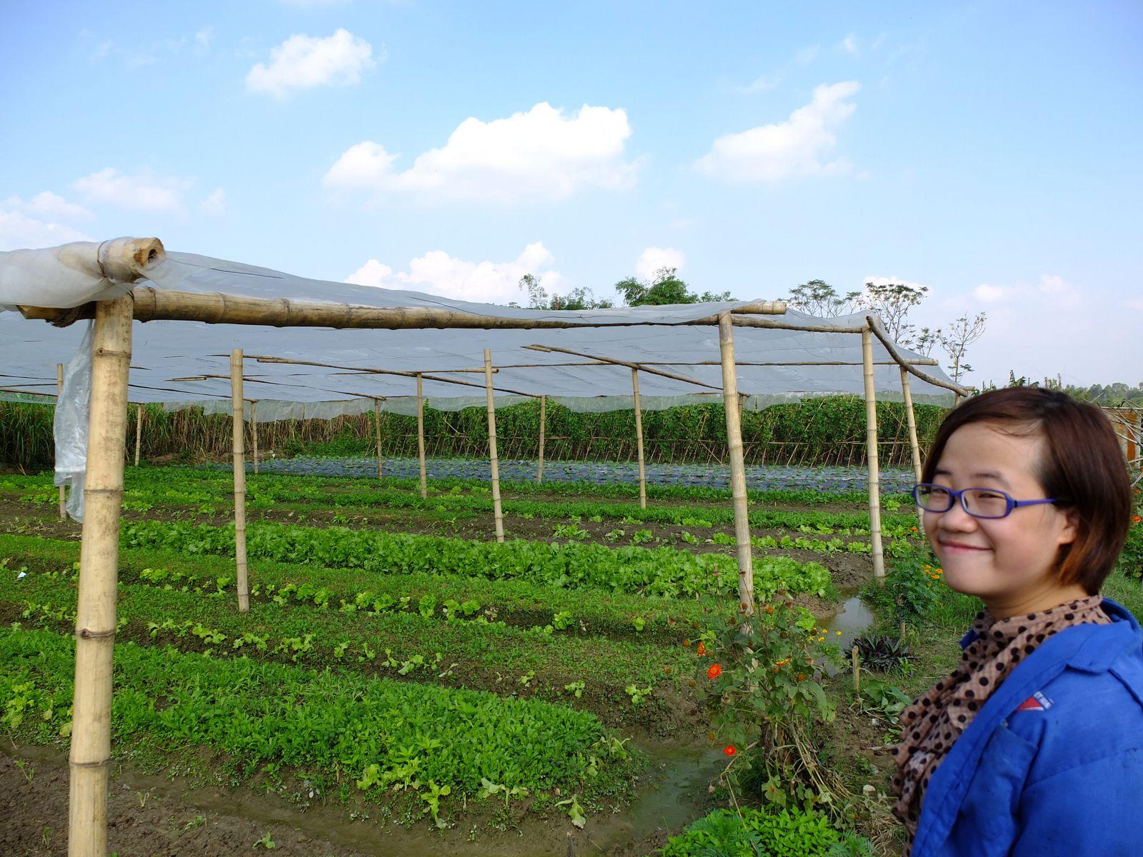 Voici donc la superficie cultivée par le groupe Bai Thuong. On le voit, on y cultive pas la biodiversité comme à Greenvietnam : ici, chaque variété  a sa parcelle. En guise de mulch (un couvert végétal au niveau du sol qui le protège de l'érosion et maintient l'eau pour la plante) nous avons des sacs poubelles en plastiques.Mais l'on retrouve quelques techniques communes : on plante de la menthe et des fleurs pour attirer les insectes et protéger les cultures.