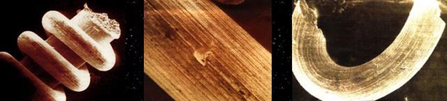 Objets métalliques datant de 20 000 à 318 000 ans, variant de 3 cm à 3/1000e de millimètre