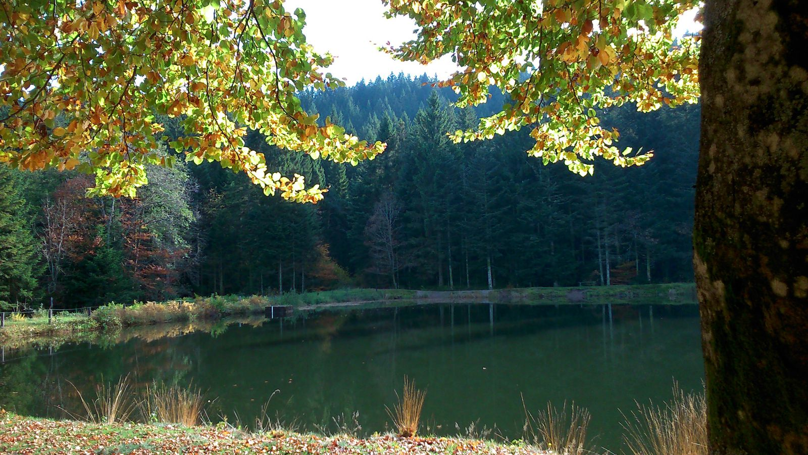 Étang du Frac Fresse sur Moselle Vosges 26/10/2013