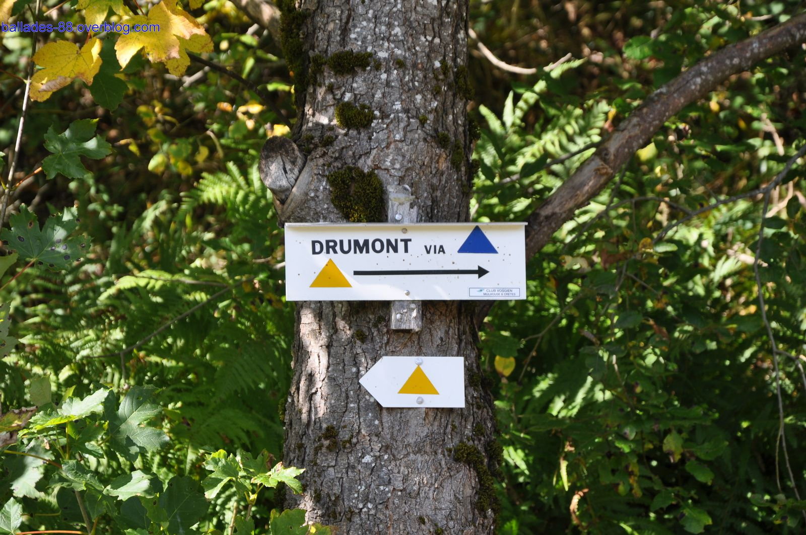 Col de Bussang/Gustiberg/Drumont.