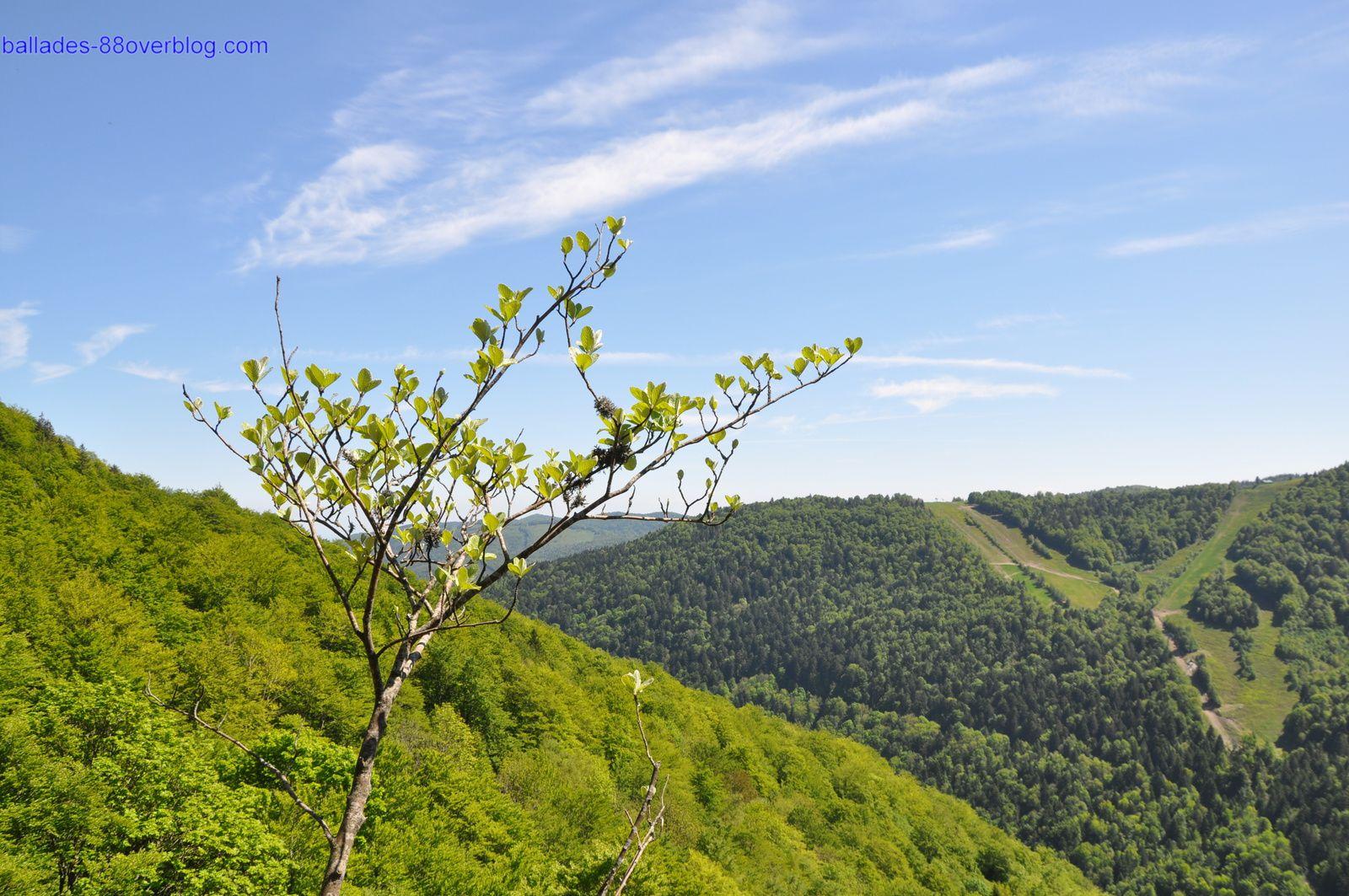 Sentier du tour du ballon d'Alsace