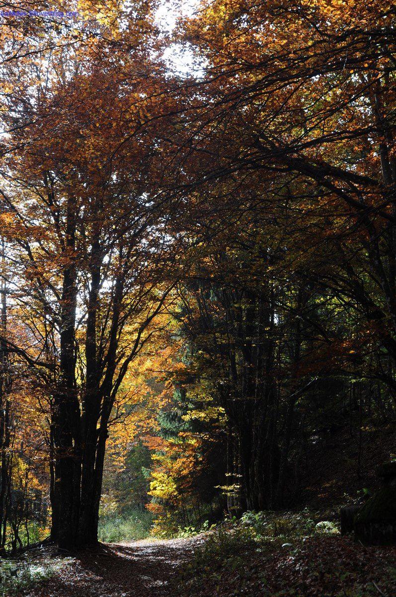 Le Markstein/Lac de la Lauch/Le Treh 12/10/2015