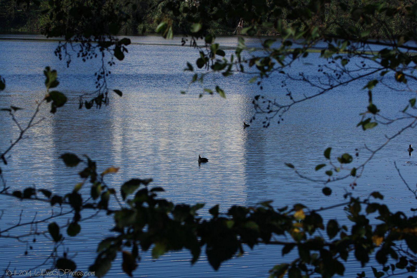 Novembre au Lac de Gassicourt