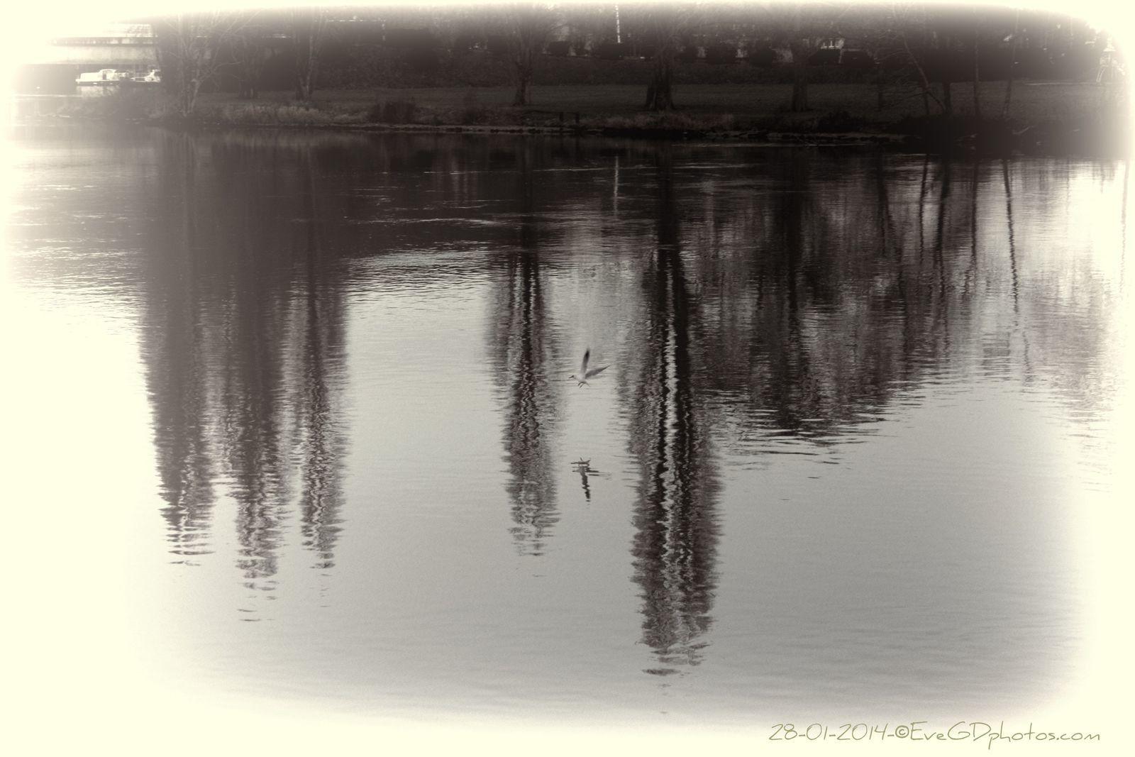 La Seine... Reflets de Janvier