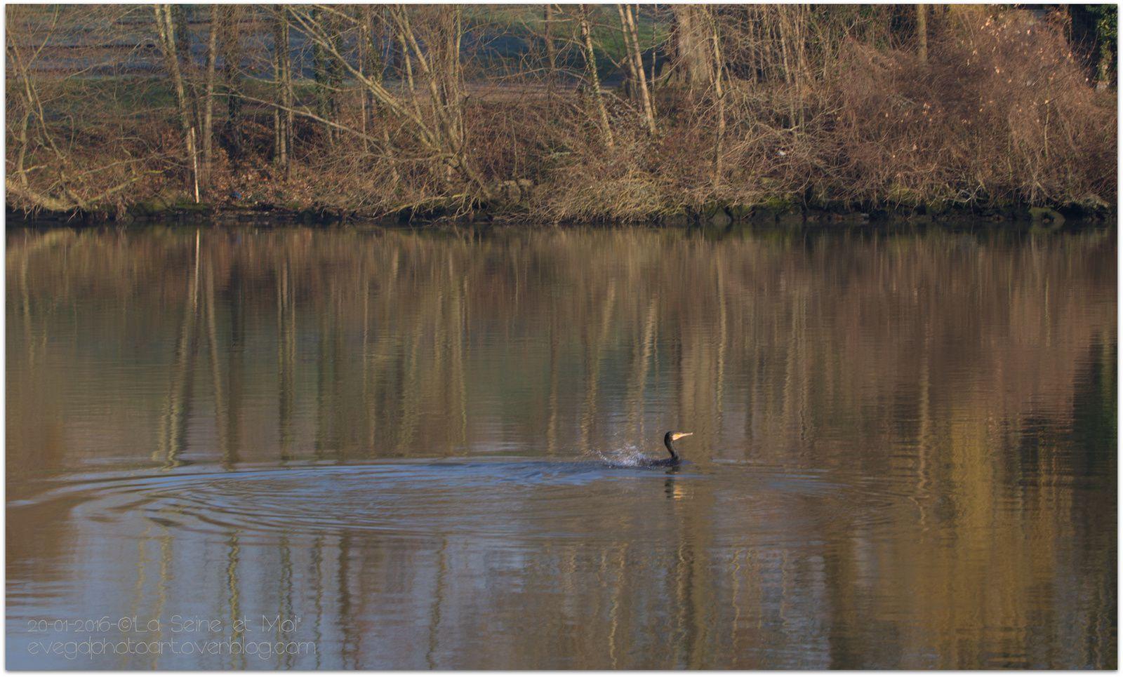 Les Bords de Seine et les Cormorans