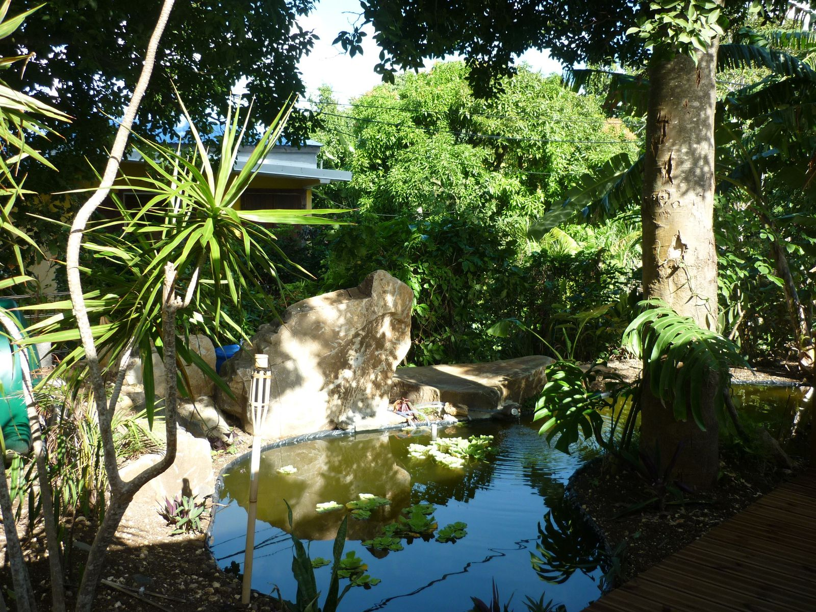 Bungalow Bois Cannelle : entr?e pour Bois cannelle avec le petit pont de bois et le bassin